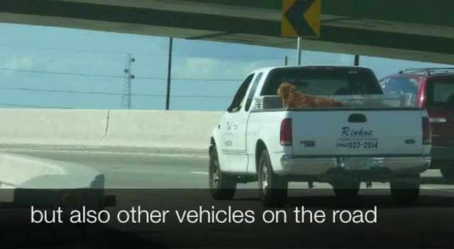 Dog Pick Up Truck Safety PSA