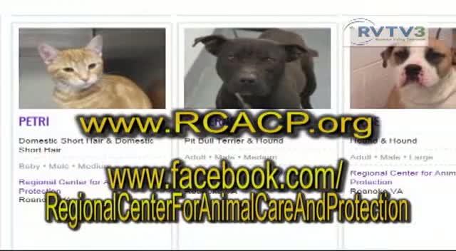 RCACP Adopt a Pet!