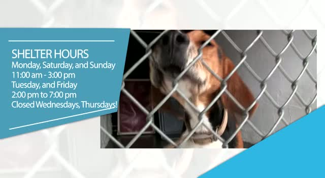 Animal Control Holiday Hours